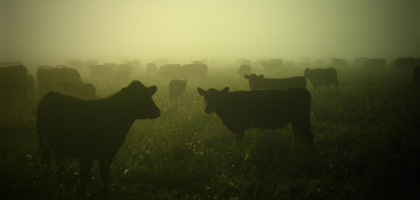 ¿Cuántas vacas vale tu pareja?